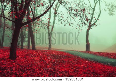 Autumn nature -foggy autumn view of autumn alley in soft fog. Foggy autumn landscape with bare autumn trees and red fallen leaves. Autumn alley in dense autumn fog. Soft focus applied.