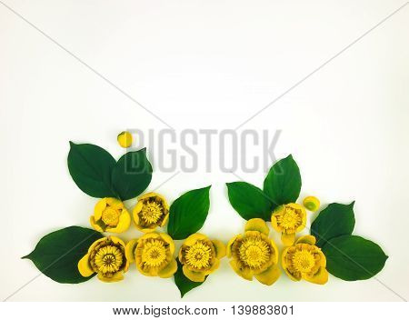 Decorative Frame With Bright Yellow Water Lilies On White Background. Flat Lay
