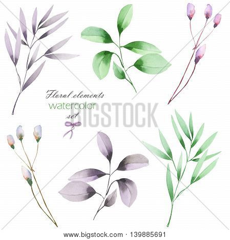 A floral set with the isolated watercolor branches with the green and purple leaves, hand drawn on a white background, for self-compilation of the bouquets and ornaments