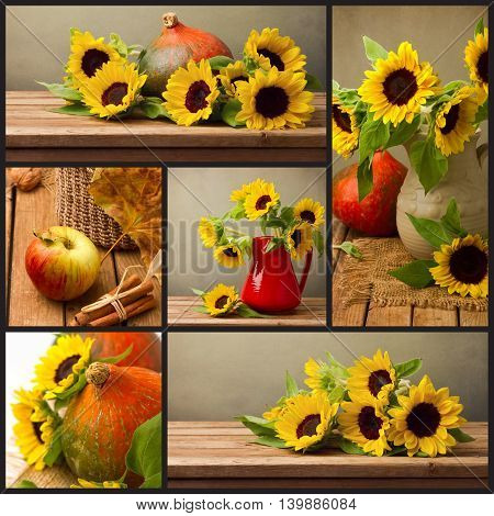 Collage of autumn season photos with sunflowers and pumpkin. Thanksgiving holiday