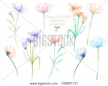 A floral set with the isolated watercolor cosmos flowers, hand drawn on a white background, for self-compilation of the bouquets and ornaments