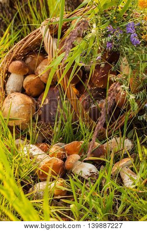 Wicker basket with Porcini mushrooms and other mushrooms and forest flowers bouquet on the forest background in the green grass, vertical