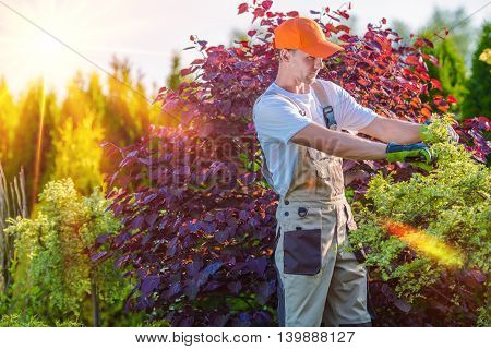 Men Taking Care of Garden. Plants Cutting. Landscaping Works.