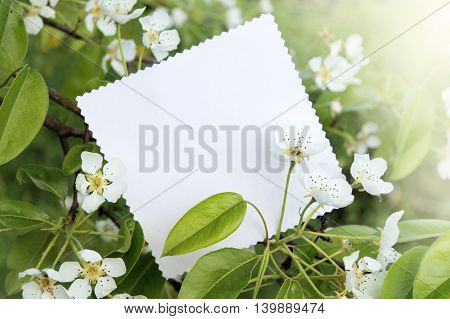 spring flowering fruit tree with a card for the labels / blooming card