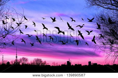 Flying birds and cityscape on beautiful purple sunset background