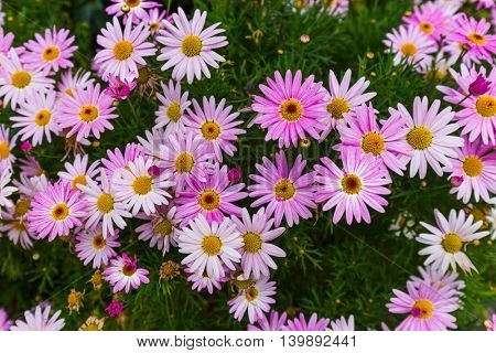 Purple flowers - nature floral background