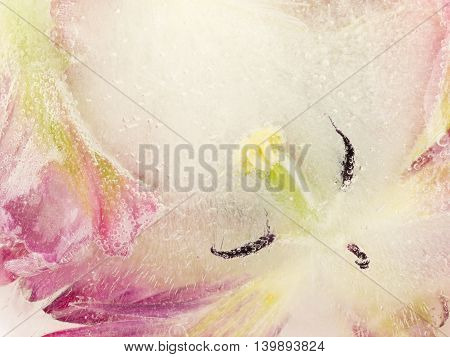 delicate fragile gentle abstraction from the center of the pink flower frozen in the clear water and beautiful air bubbles