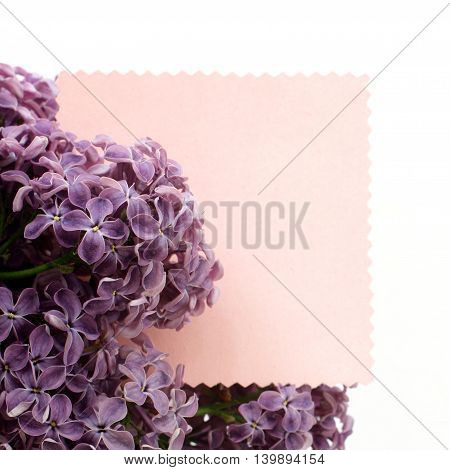 lush bunch lilacs on the background of figure form for inscriptions / suggestions spring and flowering