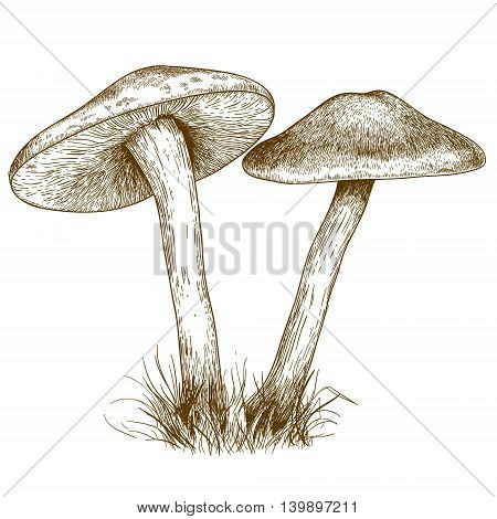 engraving vector illustration of two mushrooms isolated on white background