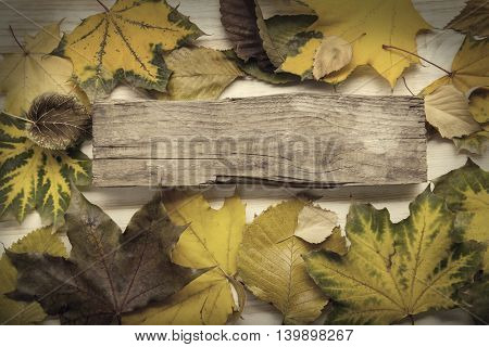 autumn ad with wooden sign for words and inscriptions and beautiful leaves, copy space, (top view)