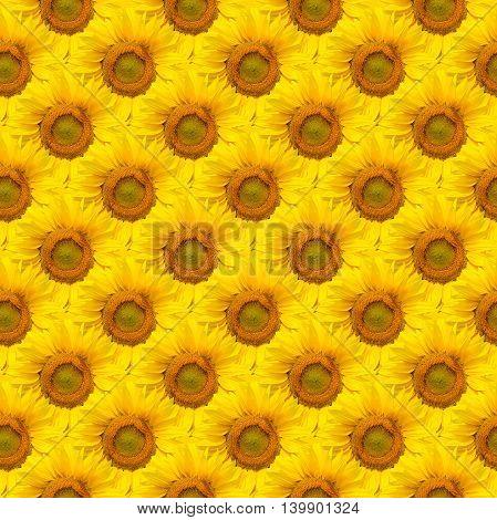 Close up beautiful sunflower seamless background pattern