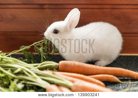 white fluffy rabbit, next to fresh carrots and greens