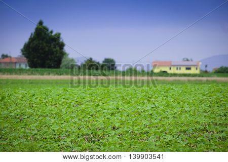 Italian agricultural summer landscape