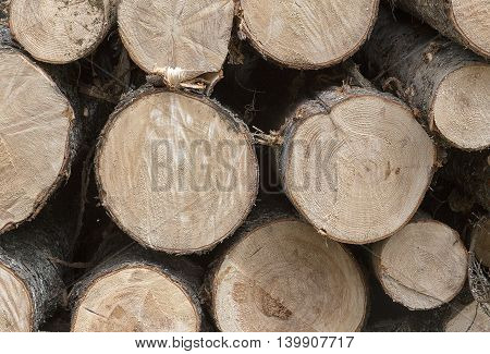Sawed ends of logs stacked in a timber yard