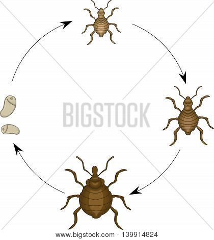 Adults and eggs of lice cartoon for you design