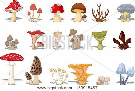 different kinds of mushrooms for you design