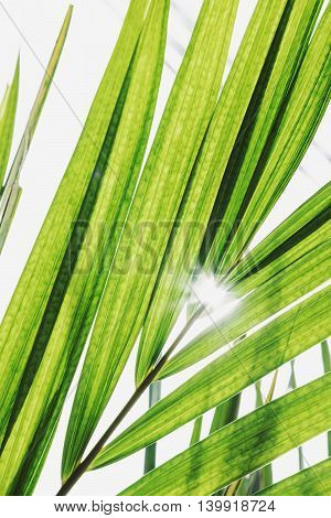 Fresh green leaves with sun rays, vertical composition