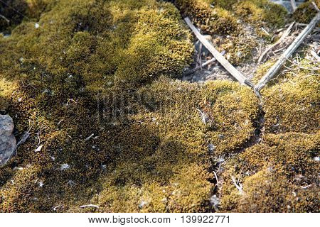 Moss background texture beautiful in nature. Cracked ground surface