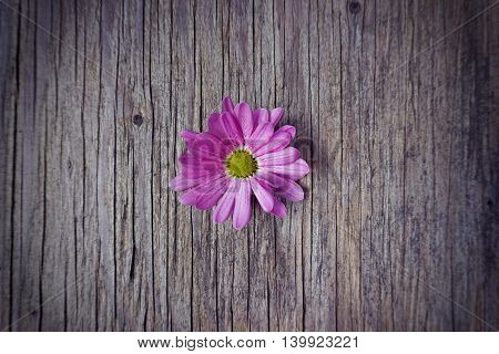 pink flower on old wooden background with copy space