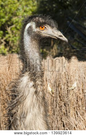 a close up of one emu with long neck head view