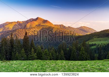 Summer landscape with spruce forest. Beautiful sunrise in the mountains. Carpathians, Ukraine, Europe. Art processing of photos. Color toning