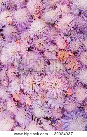 Summer Flower Blossom Wedding Freshness Background Spring Aster Advertisement Concept