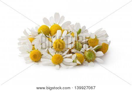 Medical Chamomile isolated on white background