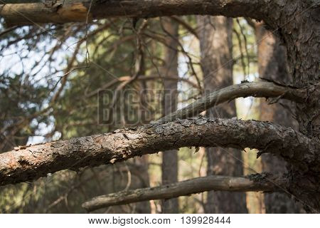 Branch in the forest in a sunny day