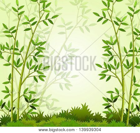beautiful bamboo forest with green grass landscape background
