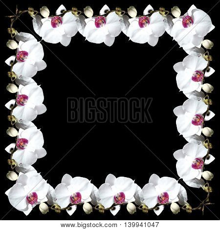 Beautiful flower background from the isolated branches of a white orchid