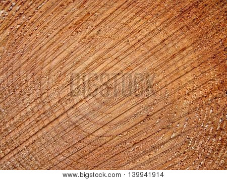 Tree ring background picture for web design and tree or wood related subjects and issues.