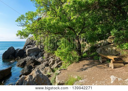 Bench under a beautiful green tree on the shore of bay.