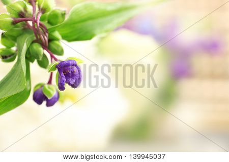 Little purple flowers, close up