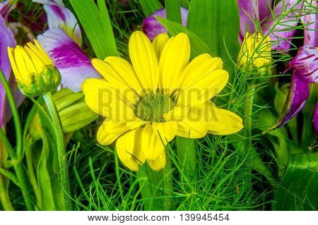 Yellow Flower Image Resembling A Daisy On A Green Background