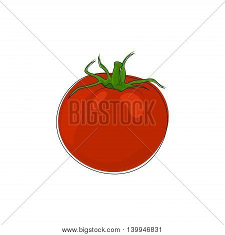 Vegetable Tomato Isolated on White Background, Red Tomato Standing ,Vector Illustration