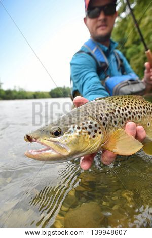 Fly-fisherman holding brown trout out of the water