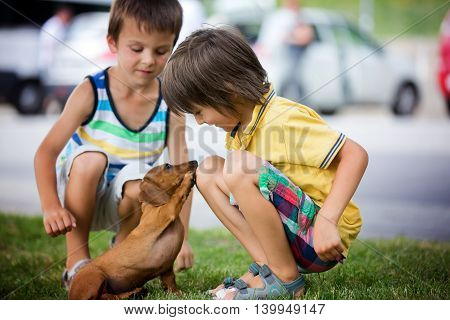 Two Beautiful Preshcool Children, Boy Brothers, Playing With Little Pet Dog In The Park
