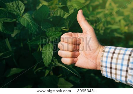 Farmer giving thumb up in cultivated soybean field satisfied agricultural worker endorsing with hand sign.
