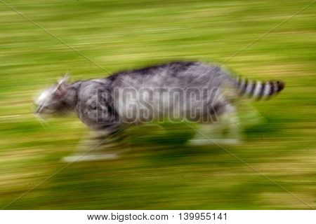 Abstract photo of cat which is running very fast