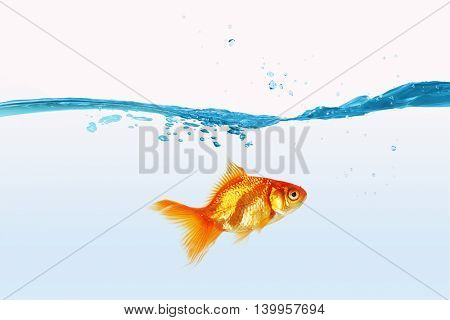 Gold fish in water . Mixed media
