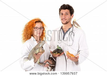 Veterinarian Team