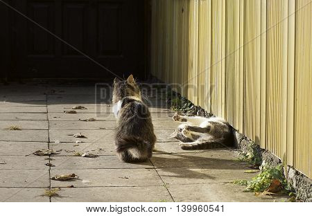 Two 2 cats playing near house in autumn time. Cats in the street. Two cats
