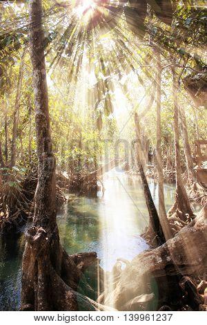 The jungle at sunrise, nature of Thailand, Asia