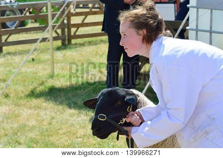 TENDRING SHOW ESSEX 11 JULY 2015: Sheep being Exhibited at Agricultural show