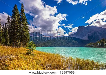 The green lake surrounded by coniferous forest. Magic Emerald Lake in Yoho National Park, Rocky Mountains