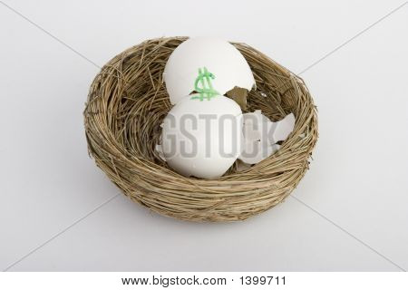 Busted Nest Egg
