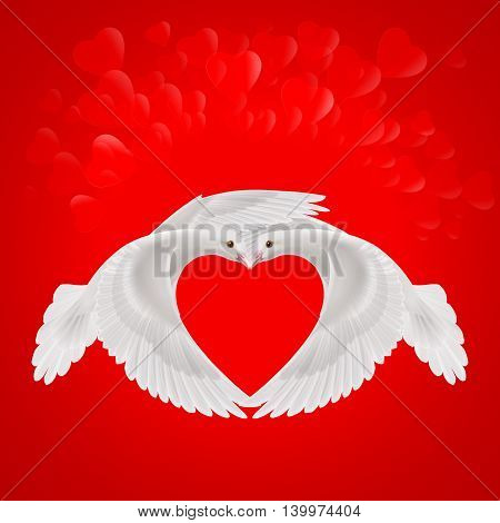 Two white doves makes the shape of the wings of the red heart