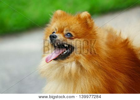 Cute fluffy dog in the park