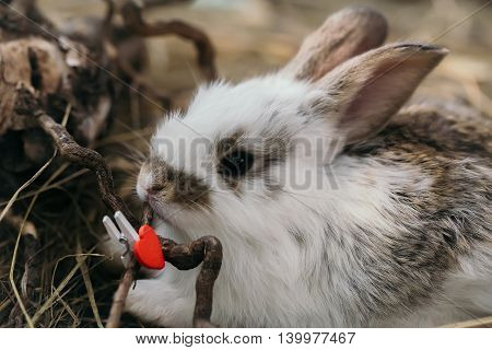 Cute Rabbit With Heart Clothespin