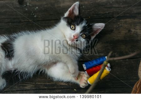 Small Kitten Playing With Thread On Twig